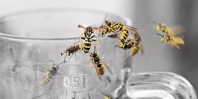 Wespen-vertreiben-Aufmacher